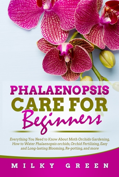 Phalaenopsis Care for Beginners